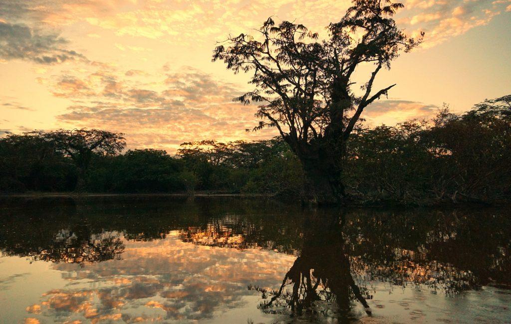 Dschungel Ecuador Cuyabeno Teil 2 (3)