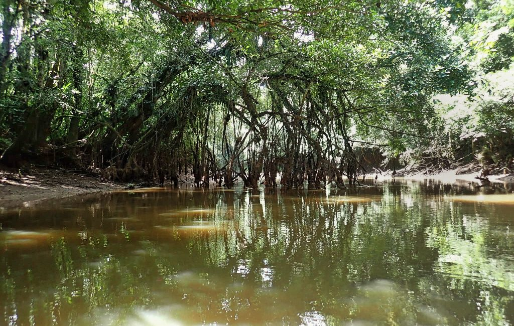 Dschungel Ecuador Cuyabeno Teil 3 (3)